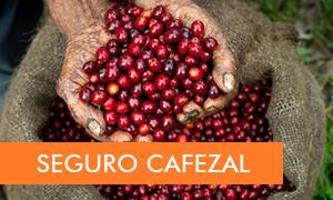 Seguro Cafezal